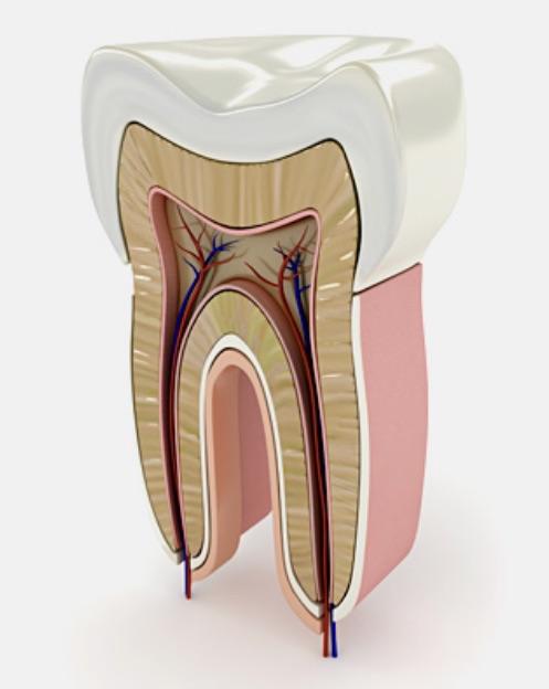 Studio Dentistico Raimondo | Trattamenti endodonzia